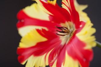 090325_cheri_flowers_019.jpg